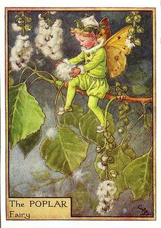 This beautiful Poplar Flower Fairy Vintage Print by Cicely Mary Barker was printed and is an original book plate from an early Flower Fairy book. Cicely Barker created 168 flower fairy illustrations in total for her many books. Cicely Mary Barker, Fairy Dust, Fairy Land, Fairy Tales, Kobold, Vintage Fairies, Beautiful Fairies, Flower Fairies, Fantasy Illustration