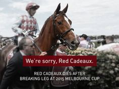 This beautiful horse has now become one of the thousands of casualties of the horse racing industry, most of whom will never make headlines. We're sorry, Red Cadeaux. You did not deserve to die for the sake of 'entertainment'. Nobody does.  May you rest in peace. For more on this story, check out: http://www.abc.net.au/.../red-cadeaux-euthanased.../6960812