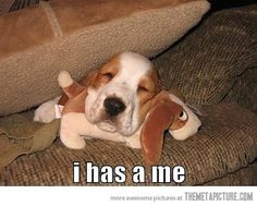 Cute Bassett hound puppy love it Funny Dog Pictures, Animal Pictures, Cute Pictures, Funniest Pictures, Hilarious Pictures, Funny Photos, Funny Dogs, Funny Animals, Cute Animals