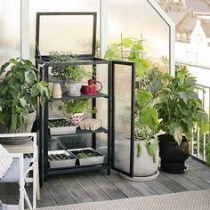 Inspiration for your own magical mini garden Balcony Herb Gardens, Balcony Plants, Porches, Zen, Outside Living, Green Rooms, White Gardens, Decoration, Vegetable Garden