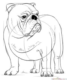 How to draw English Bulldog step by step. Drawing tutorials for kids and beginners.