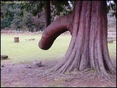 57 Best Naughty Nature Images Nature Plants Weird Trees