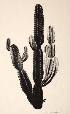 Louis Lozowick Cactus | Cleveland Museum of Art