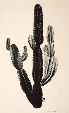 Louis Lozowick Cactus | Cleveland Museum of Art