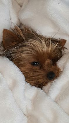 Then she is beautiful! #yorkshireterrier