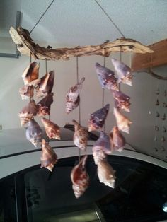 Fighting conch windchimes Seashell Crafts, Beach Crafts, Diy And Crafts, Fighting Conch, Sea Shells, Conch Shells, Shell Wind Chimes, Shell Lamp, Outdoor Crafts