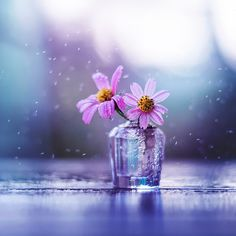 Sweet melodies by Ashraful Arefin - Photo 162745047 - 500px