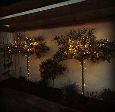 Dandelion, Celestial, Sunset, Garden, Flowers, Plants, Outdoor, Outdoors, Garten