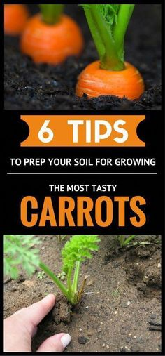 how to grow my own organic vegetable garden
