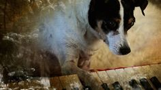Renowned performance artist Laurie Anderson, in partnership with Times Square Arts, is putting on a low-decibel concert that only dogs can hear. Humans will have headphones to help them hear what&#…