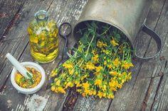 Třezalka tečkovaná (Hypericum perforatum) Herbal Tinctures, Herbalism, Flowering Plants Names, St Johns Wort Plant, Planting Succulents, Planting Flowers, Wounded Healer, In Natura, Positive Outlook