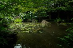 @日本/Japan @京都/kyoto @大山崎山荘美術館 @あじさいの咲く庭園 @Japanese garden