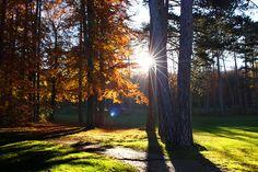 Herbstausflüge in und um Wien | Stadtbekannt Wien | Das Wiener Online Magazin Vienna, Plants, Fall Weather, Beautiful Places, City, Nice Asses, Flora, Plant, Planting