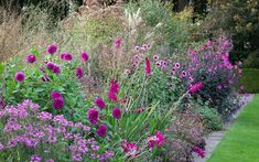 The purple border. The purple border at De Boschhoeve. Dahlia 'Magenta Star', D.'Le Baron', Cleome 'Senorita Rosalita' in the foreground.