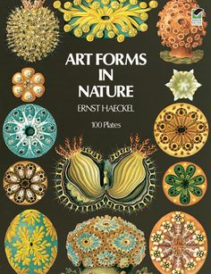 Art Forms in Nature, a reprint of Kunstformen der Natur by Ernst Haeckel, 1904