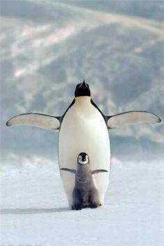 Pinguinos, hermosos!!!
