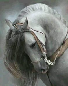 FB Horses & Freedom.  Gorgeous!