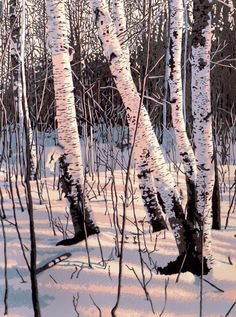 "Six-color linocut print of white birch trees in afternoon winter light, entitled ""Paper Shadows"". by William Hays via Etsy."