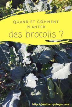 Quand et comment planter des brocolis ? http://jardiner-potager.com