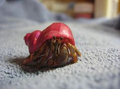 Make Toys for a Hermit Crab