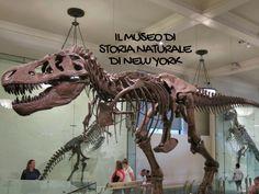 NEW YORK: AMERICAN MUSEUM OF NATURAL HISTORY  Già prima di partire per l'America sapevamo che il Museo di Storia Naturale di New York sarebbe stato una delle tappe imperdibili del nostro viaggio.  La piccoletta di casa non si perde un solo museo o mostra con i suoi amati dinosauri e questo museo