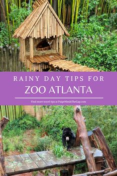 Don't let the weather stop you from visiting the zoo! Here's everything you need to know about visiting Zoo Atlanta in the rain. Usa Travel Guide, Travel Usa, Travel Tips, Travel Advise, Canada Travel, Travel Ideas, Travel Destinations, Atlanta Travel, Atlanta Zoo
