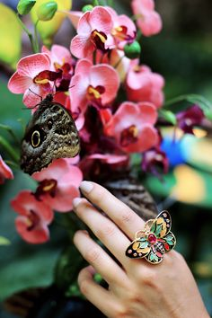 CIRO Butterfly Collection. Butterfly palm house Vienna Austria