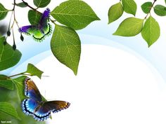 Make a photography portfolio and share tips about preserving nature through free Nature leaves PPT template with a butterfly and leaves in the background. Powerpoint Template Free, Powerpoint Presentation Templates, Powerpoint Presentations, Microsoft Powerpoint, Templates Free, Hydroponic Farming, Hydroponics, Ecology Design, Slide Design