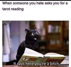 Cat funny Silly Cats, Funny Cats, Witch Meme, Tarot Readers, When Someone, Tarot Cards, Funny Memes, Sayings, Reading