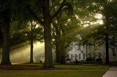 university of south carolina campus - Google Search