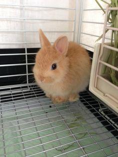 bunny、8week
