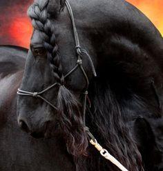 caballos (31).jpg
