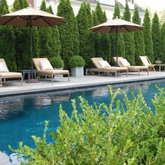 Emerald Arborvitae - privacy trees by pool                                                                                                                                                                                 More #formalgardenplanning