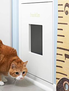 Pet litter box Storage put into a bottom cabinet with a door to go in and out...perfect so the big dogs wouldn't get in and would cut down on odor!