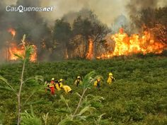 Cauquenesnet / Noticias de Cauquenes: Incendio de Tabolguén en Cauquenes está en etapa d...