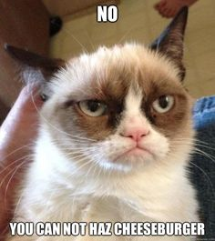 Grumpy Cat - No You can not haz cheeseburger