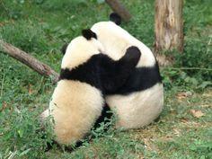 Panda hugs! The best kind of hug ever