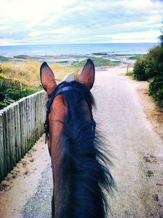 best view of the world is seen between the ears of a horse