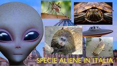 SPECIE ALIENE IN ITALIA:documentario In questo video World Natura vi fa scoprire le specie aliene in Italia. Queste specie invasive vengono chiamate alloctone,mentre quelle già esistenti nel proprio habitat si definiscono autoctone. Q #specieinvasive #specieanimali