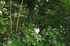 Paal (Niño Lacandón) Hijo de K´iin (Sol) Selva Lacanjá, Chiapas