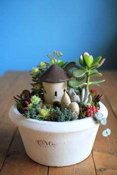 Continue planting succulents miniature garden variety. Hana atelier sale maple planting succulents: image of