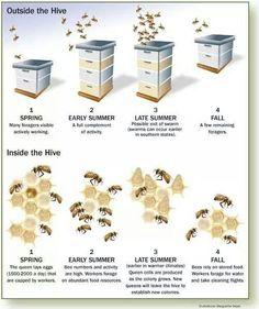 Bee detail! ///// Apiary Supplies - Beekeeping Supplies - Honey Supplies found at Apiary Supply | www.apiarysupply.com