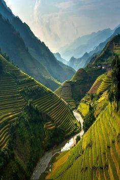Rice Terraces, Vietnam photo by mucang