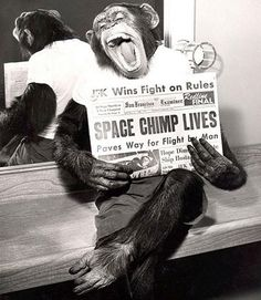 A space chimp posing to camera after a successful mission to space, 1961. Tumblr