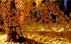 Edycja Tapety: Las, Drzewa, Liście, Jesień