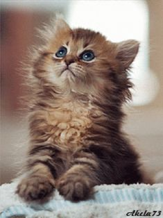 13 Adorable Kitten GIFs That Will Make You Never Want to Leave the Internet – SheKnows Kittens And Puppies, Cute Cats And Kittens, Baby Cats, Kittens Cutest, I Love Cats, Ragdoll Kittens, Funny Kittens, Bengal Cats, Cute Kitten Gif