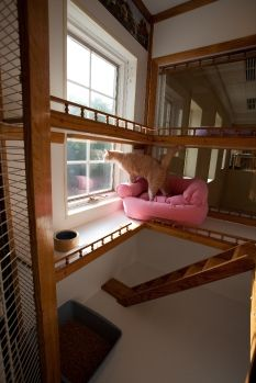 Love this idea for cat boarding, except use tempered glass instead of bars.