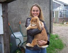 One favourable appearance of lop ear Rabbits are their ears, and the French Lop is a relatively large sized Bun at that. Find out if a French Lop just as gentle as the Flemish Giant and discover info you should look out for before getting one. Baby Bunnies, Cute Bunny, Big Bunny, Bunny Rabbits, Animals And Pets, Baby Animals, Cute Animals, Cute Creatures, Beautiful Creatures