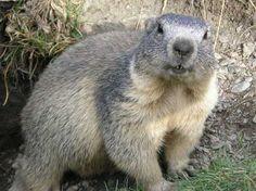 Skind og pels i yngre jernalder og vikingetid. Beklædningsdele i skind har ikke en fremtrædende plads i det arkæologiske fundmateriale i denne periode, selvom de fortsat må have været anvendt. Når pels optræder i dragten, er det primært som pynt, kantninger eller foringer af dragten. I modsætning til i ældre jernalder foretrak man nu pels fra vilde dyr, og i den sammenhæng må pels anses for at være et luksusmateriale. Dette er i stærk kontrast til ældre jernalder, hvor der næsten udelukkende…