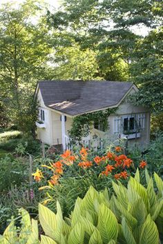 Cottage style plantings around backyard shed. Canna lilies and daylilies provide colorful interest.